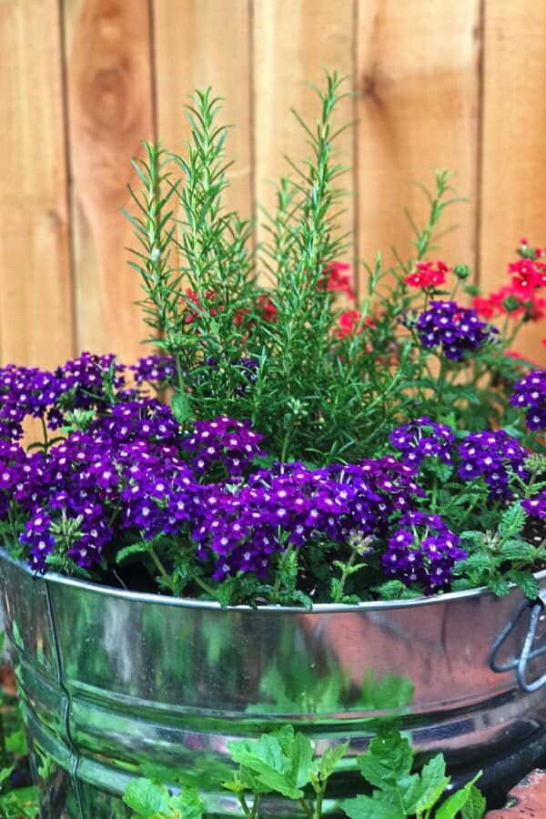 Summer flower ideas! Hint – they're all super easy to grow!!