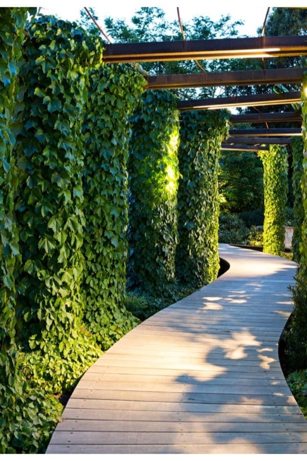 Uplighting on ivy lined poles