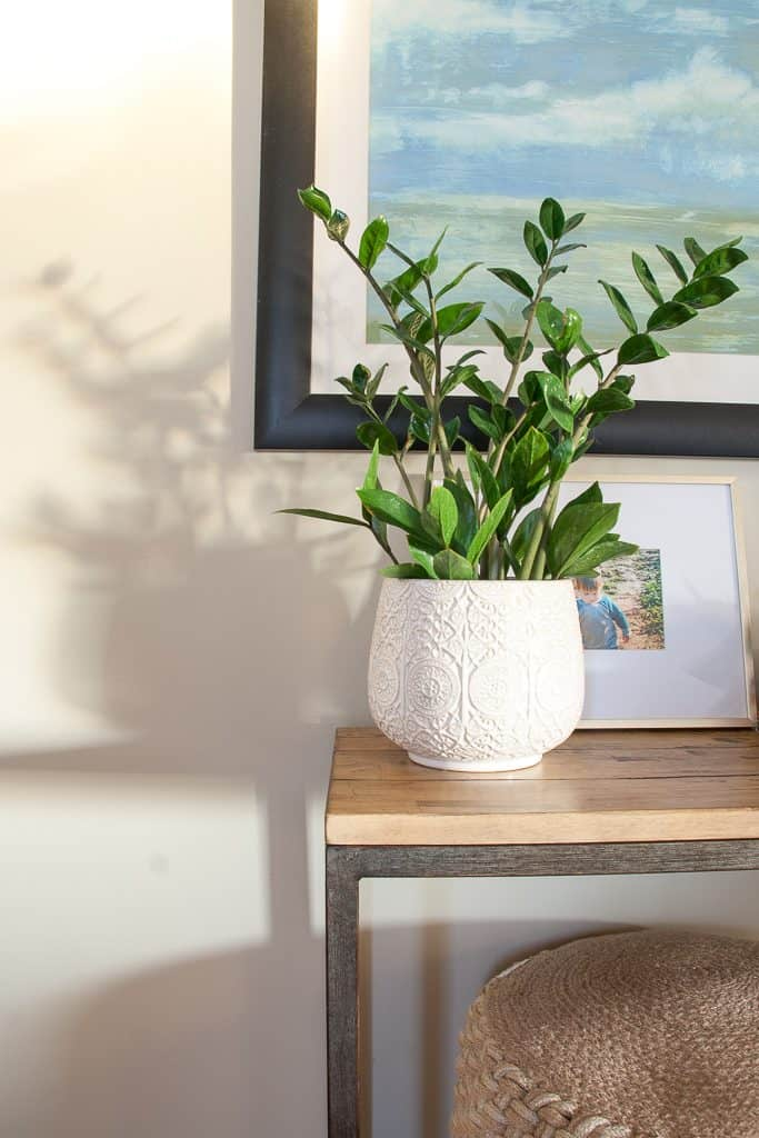 Sneak Peek Home Tour : Close up of our ZZ Plant