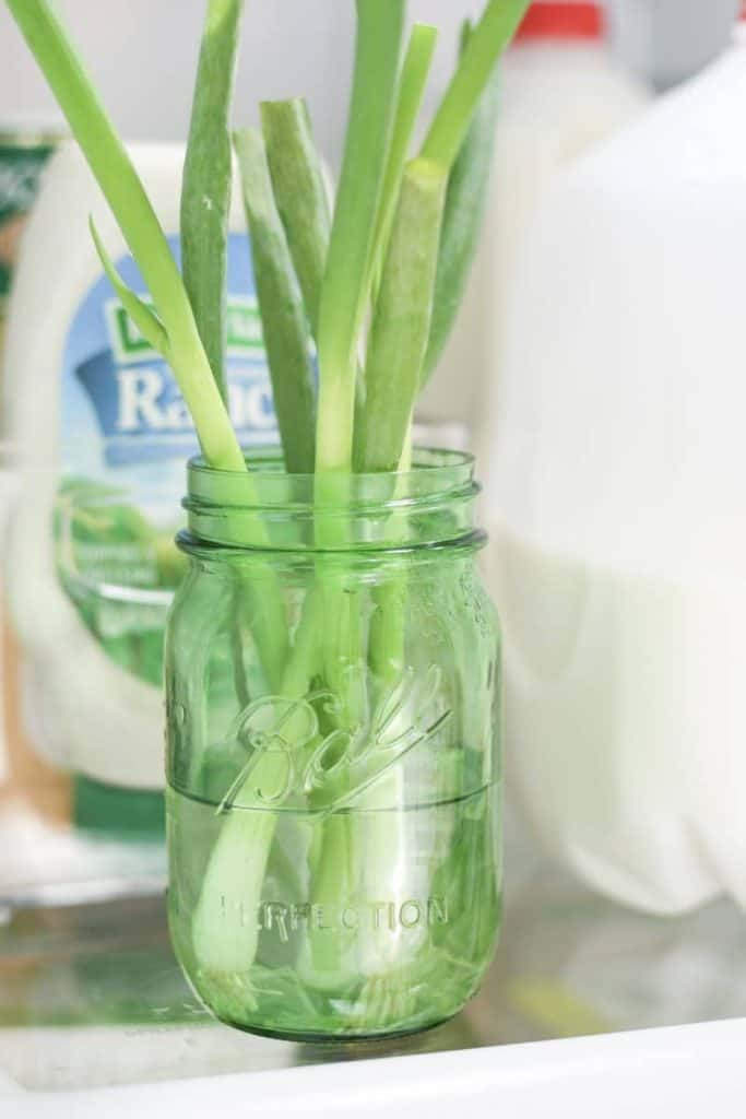 how to store scallions