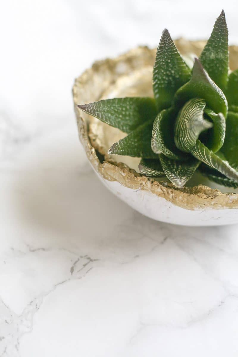 gold tipped clay bowl with greenery