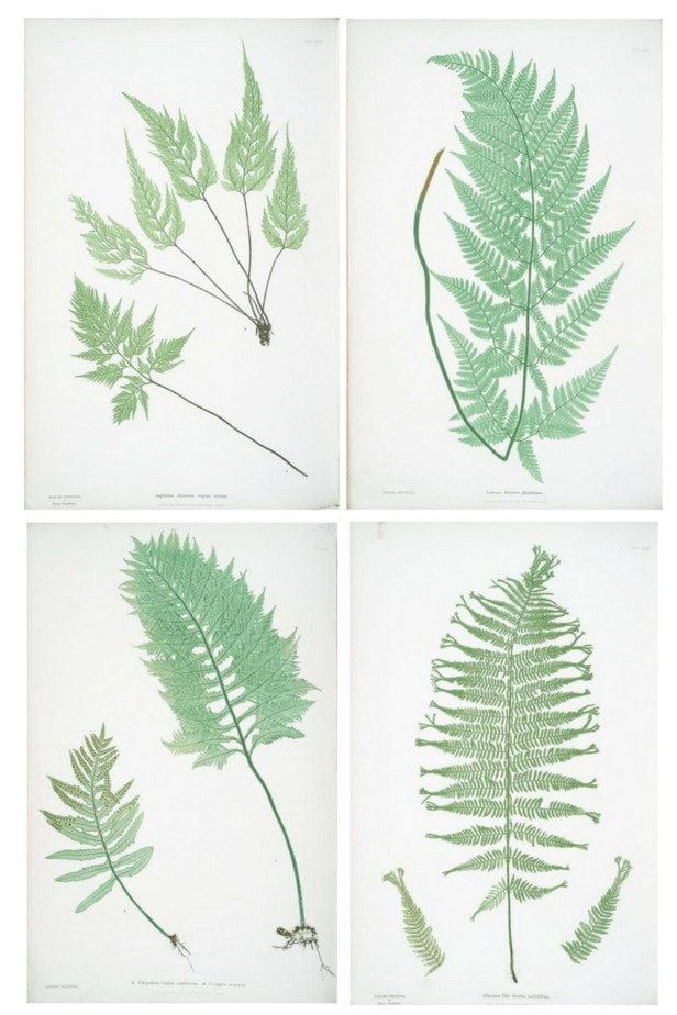 Free Botanical Art - Find out how