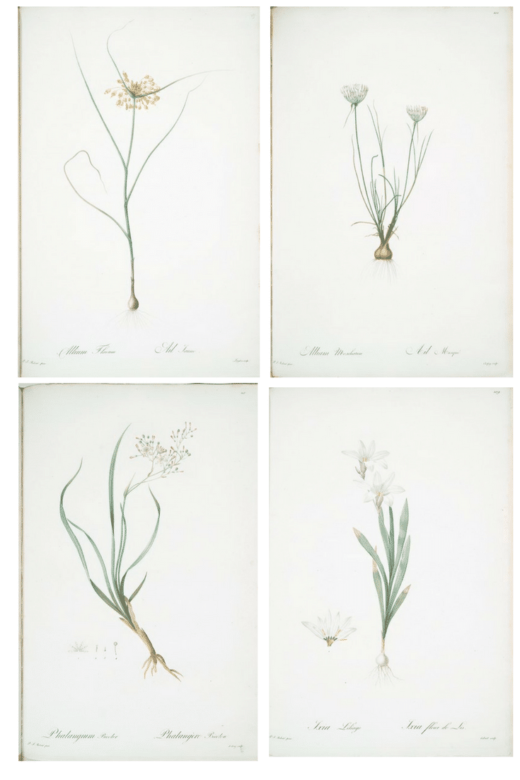 Free, Ready to Print Botanical Art : Check out this great source for beautiful prints.