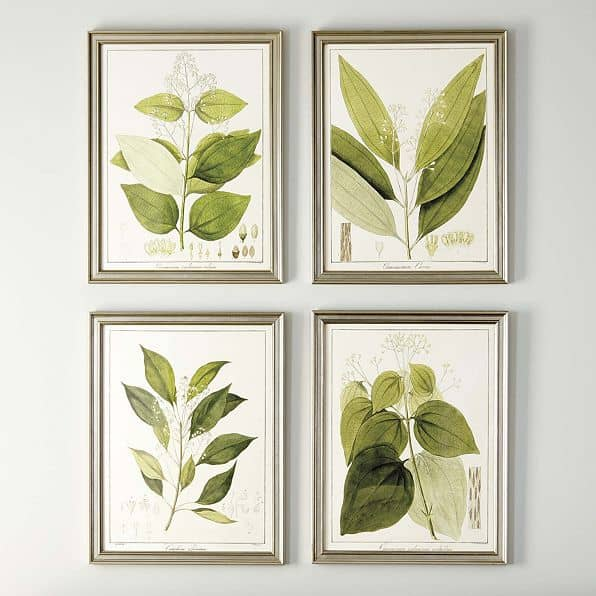 Ballard Designs Botanical Art Prints