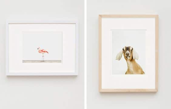 The Animal Print Shop | Ribba Frames | Discover the best items at IKEA.