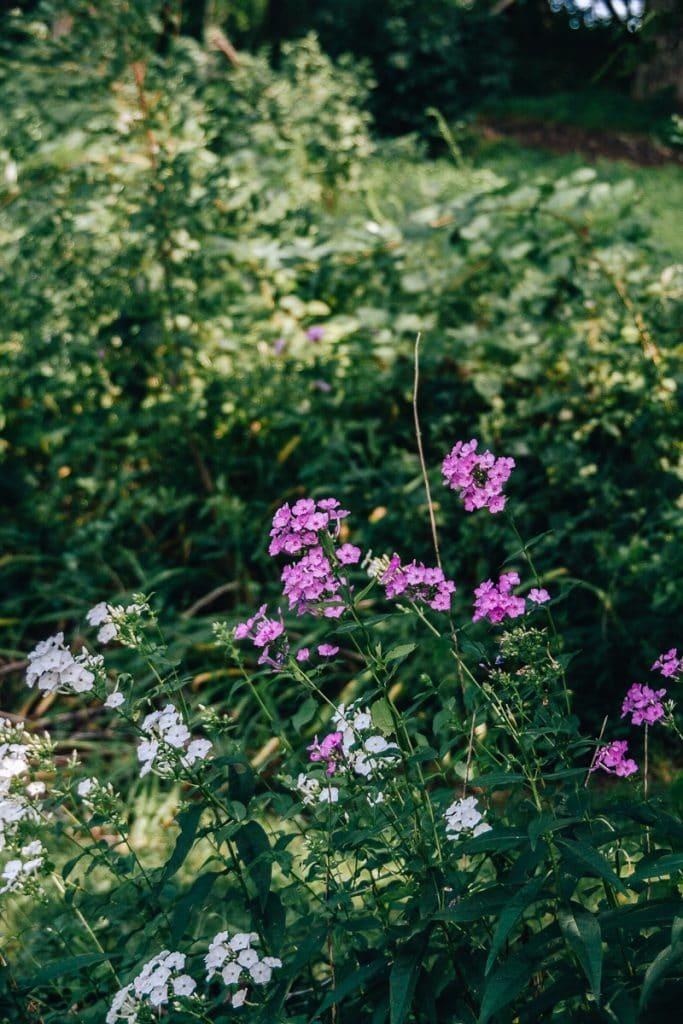 Wildflowers in a field farm