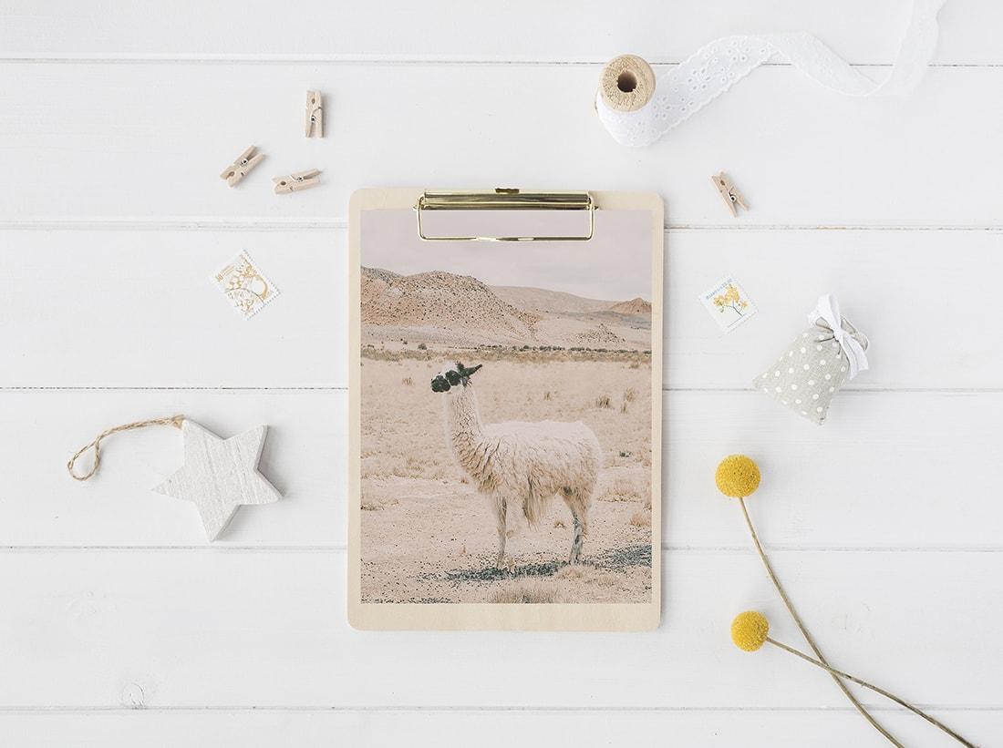 free llama printable art / decorhint.com