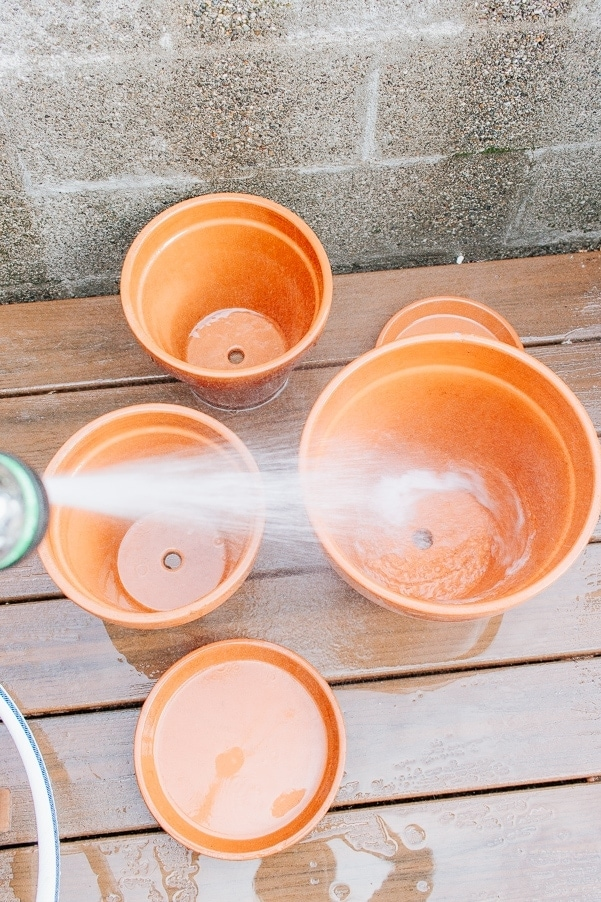 How to Clean Terracotta pots and why you should