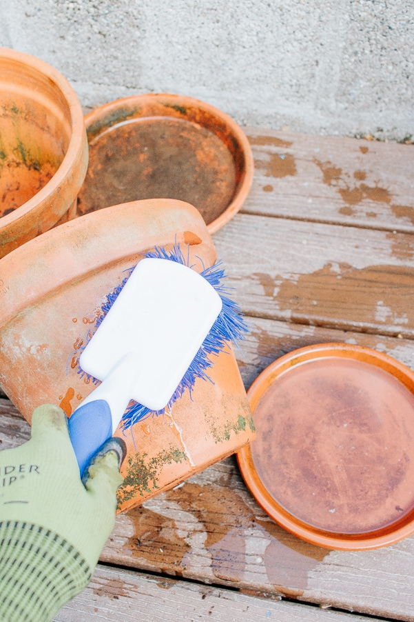 Scrub terracotta pots with brush