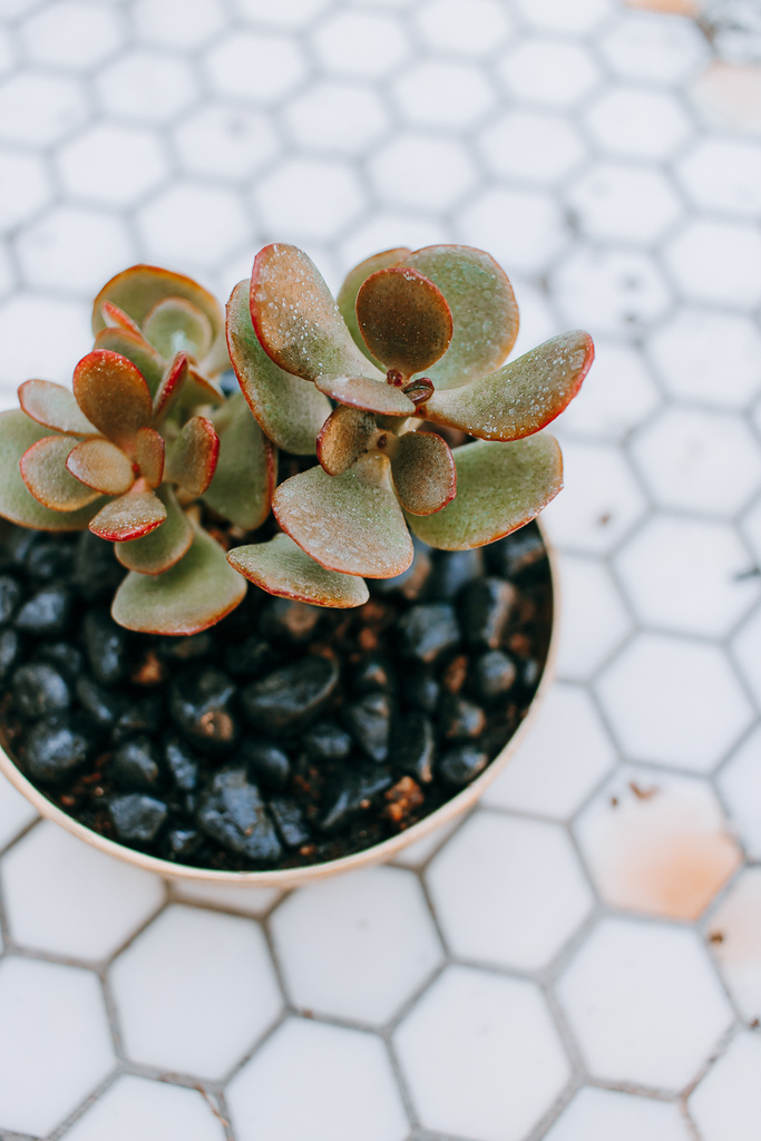 How to Create a DIY Succulent Planter