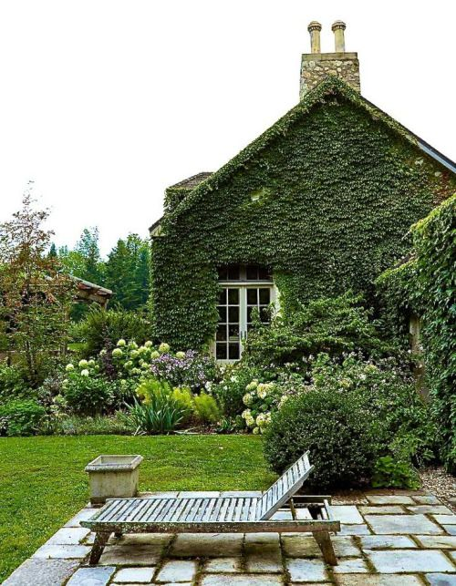 Outdoor Spaces - Ivy Growing on Home