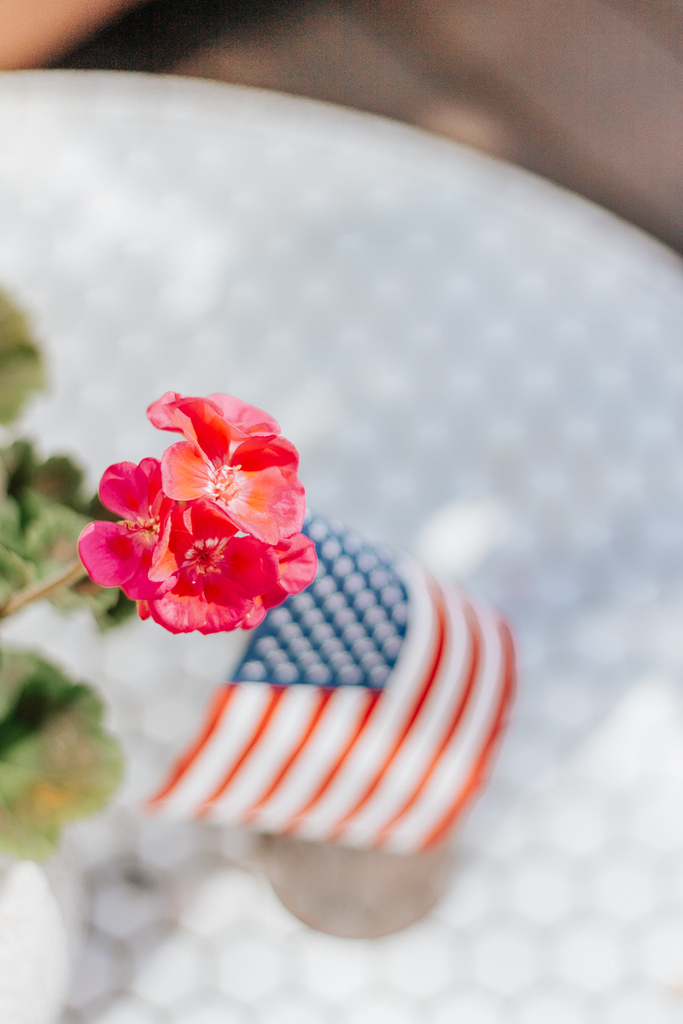 Geranium with American Flag