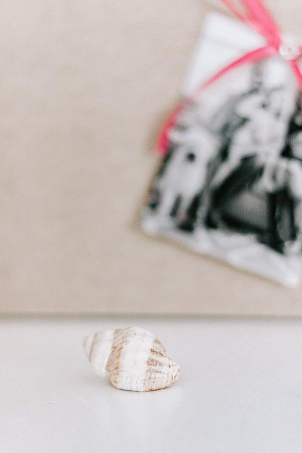 white seashell on desk