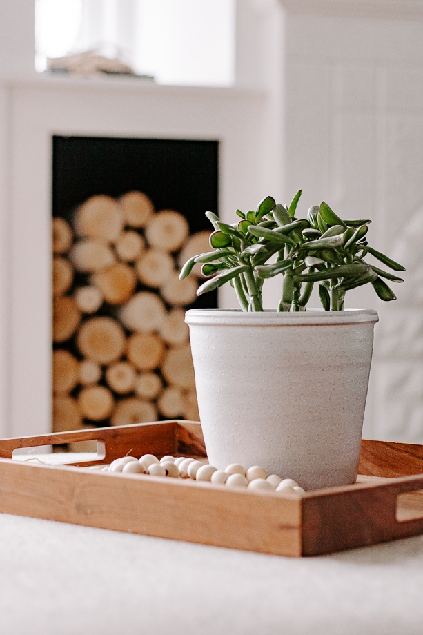 jade plant in gray vase on tray in living room