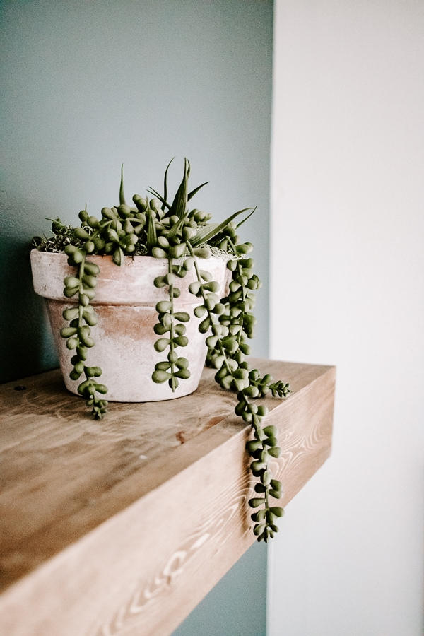 Faux aged pots with string of pearls plant