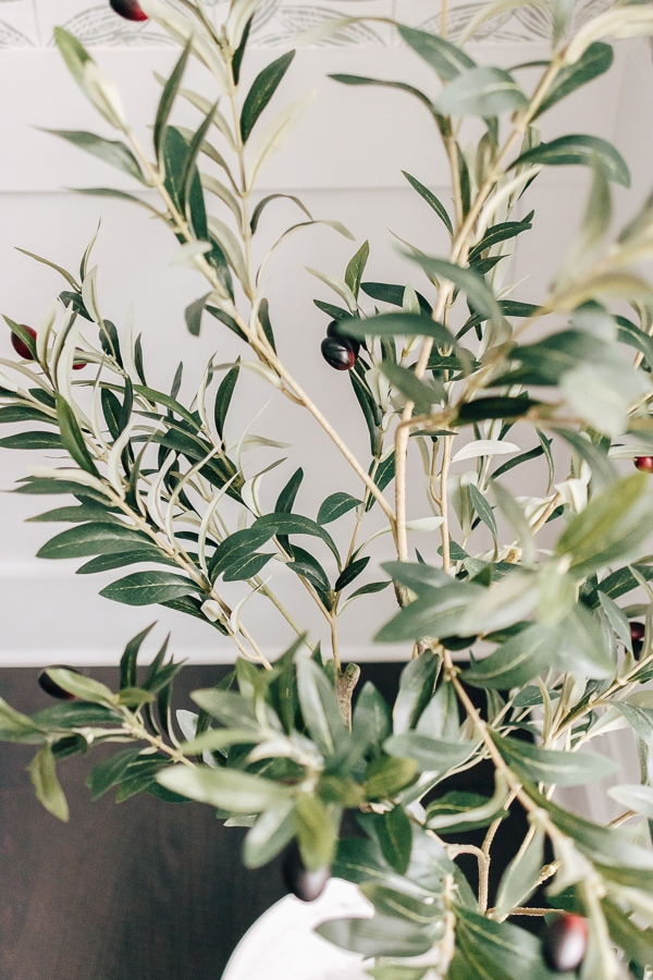 close up of leaves on olive tree