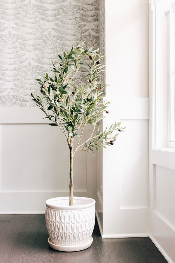 faux olive tree near a window