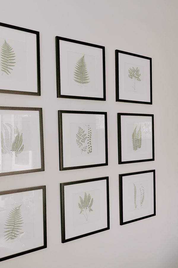 set of 9 botanical fern prints hanging on wall