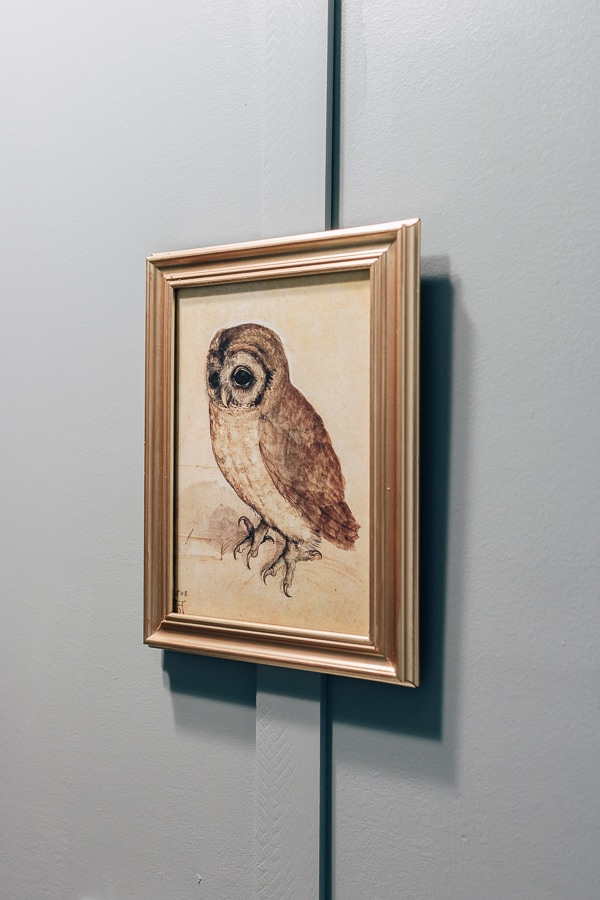 vintage photo of an owl in a gold frame