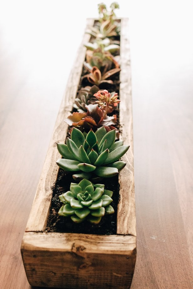 close up view of a diy succulent planter made out of wood with mini succulents planted in it