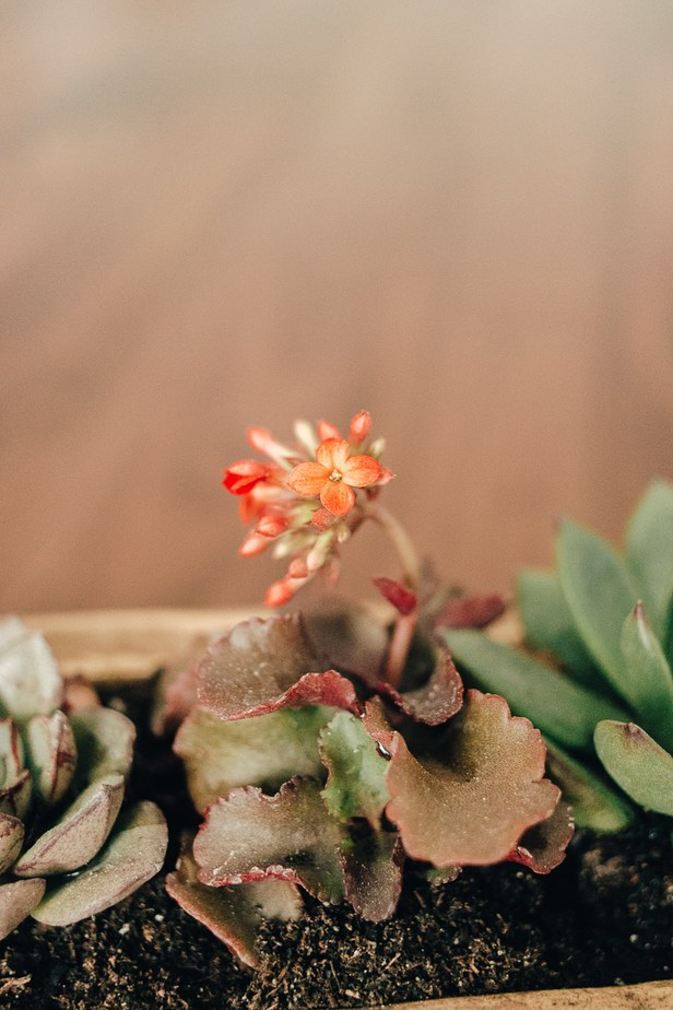 close up view of a succulent flower in a wood planter