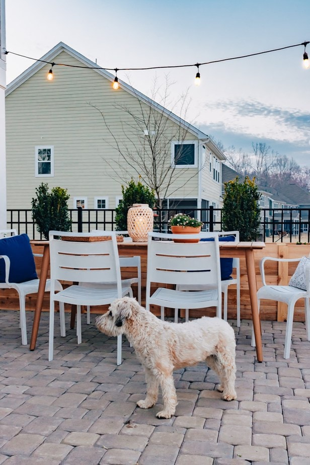 Eucalyptus outdoor dining table with white chairs.  There are cafe lights hanging above .  A dog is in the picture