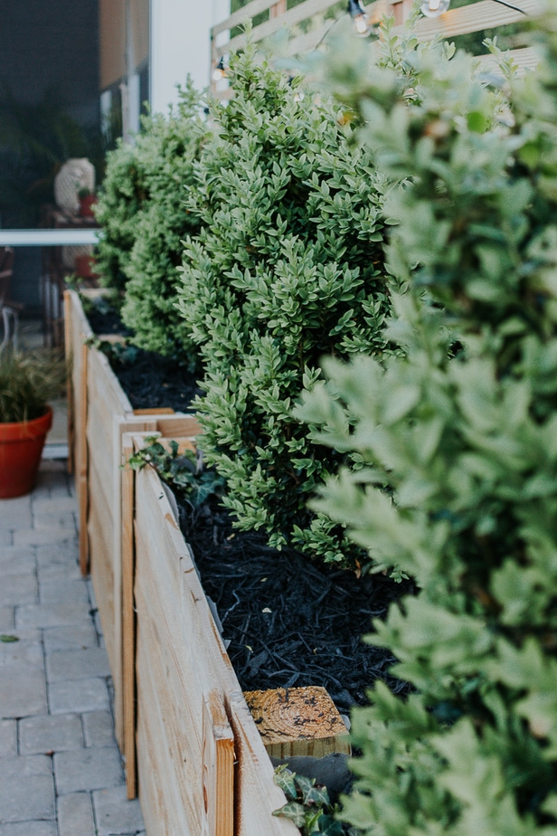 View of a cedar and pine diy trellis against planter boxes. how to build a trellis from start to finish! Learn how easy it is to make your own!