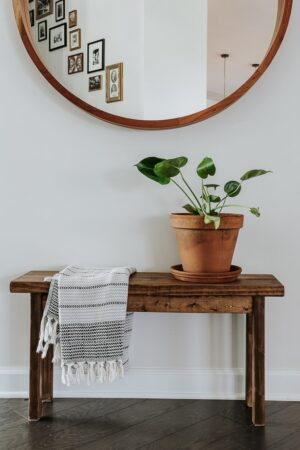 cellar door plants review!