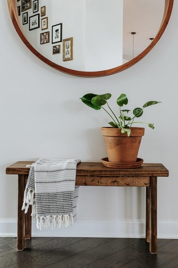 Cellar Door Plants Review - a beautiful monstera in a terracotta pot.